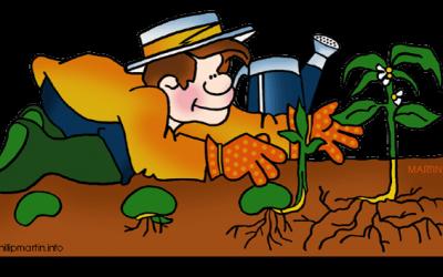Poskusi z rastlinami