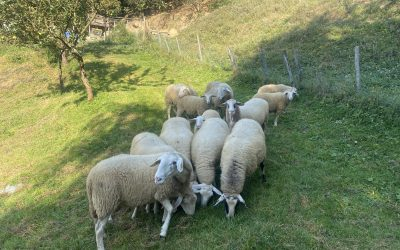 1. VIO – 1. ND: Obisk kmetije in spoznavanje domačih živali