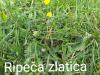travnik-3